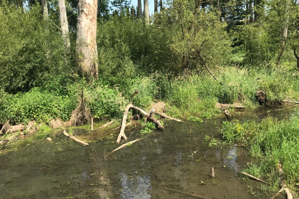 Tag der Flüsse: Fluss-Wanderungen mit dem NATOUR-GUIDE