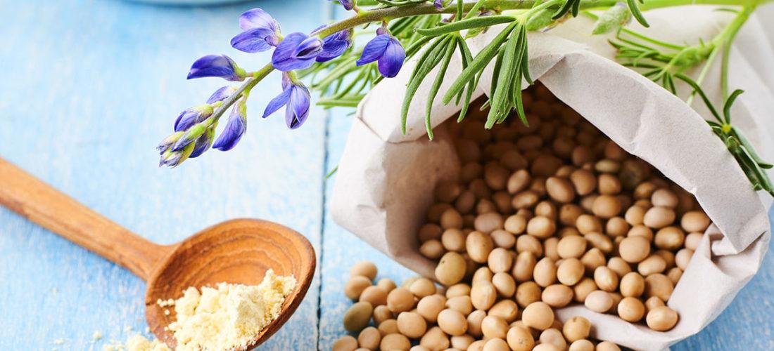 Nicht nur für Vegetarier: <br/>Pflanzliches Protein in der Ernährung