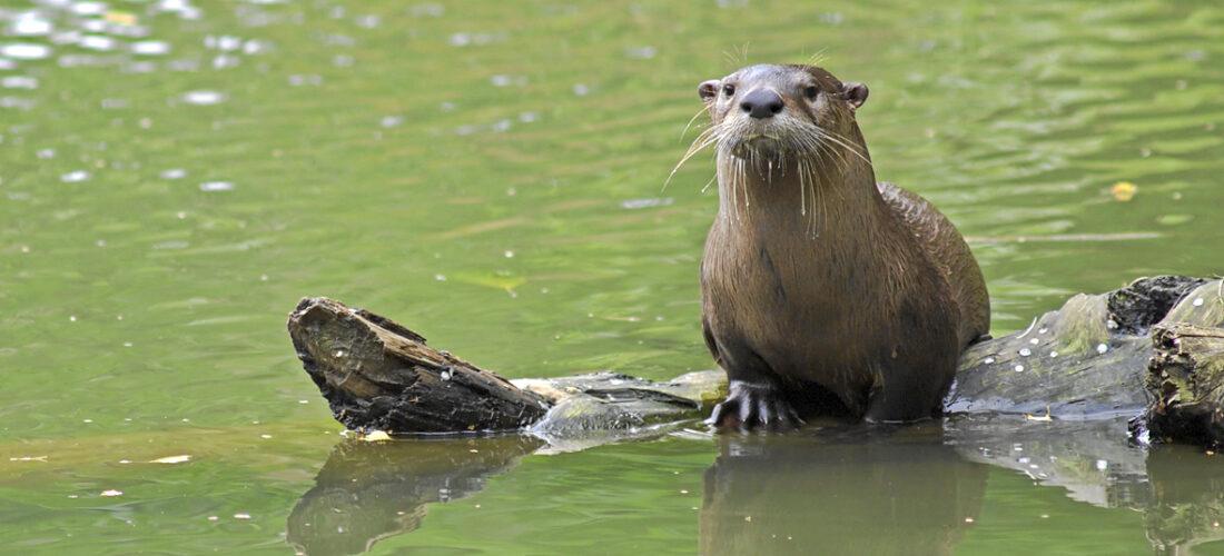 Nachhaltig vererben – bedrohte Tierarten und Lebensräume schützen