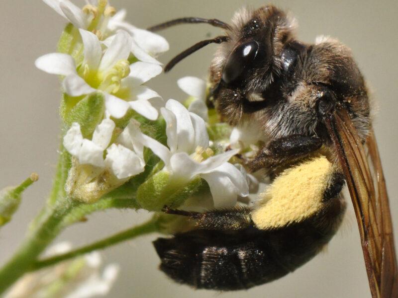 Nachhaltig vererben und biologische Vielfalt erhalten
